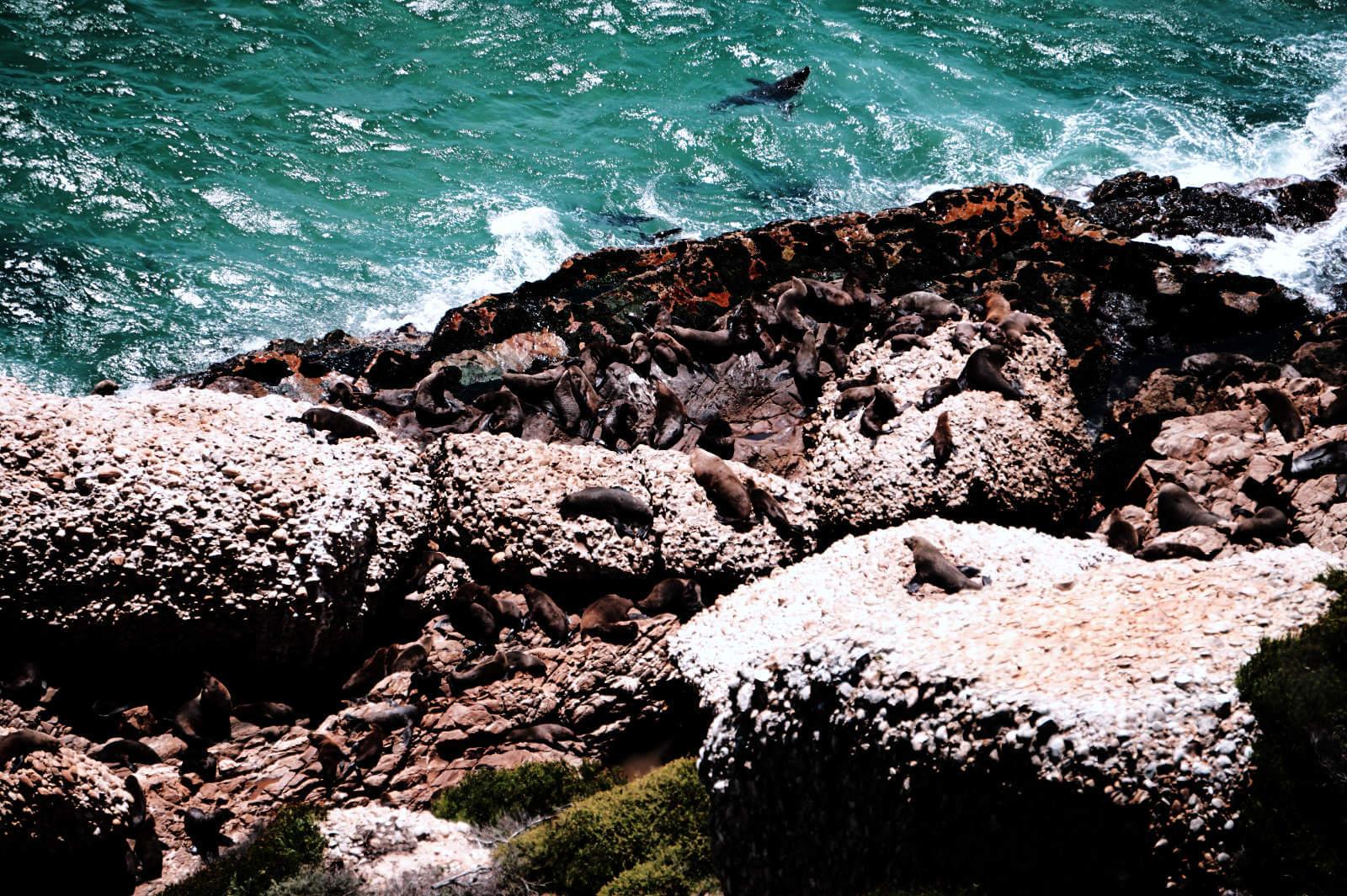 Seehundkolonie in Robberg