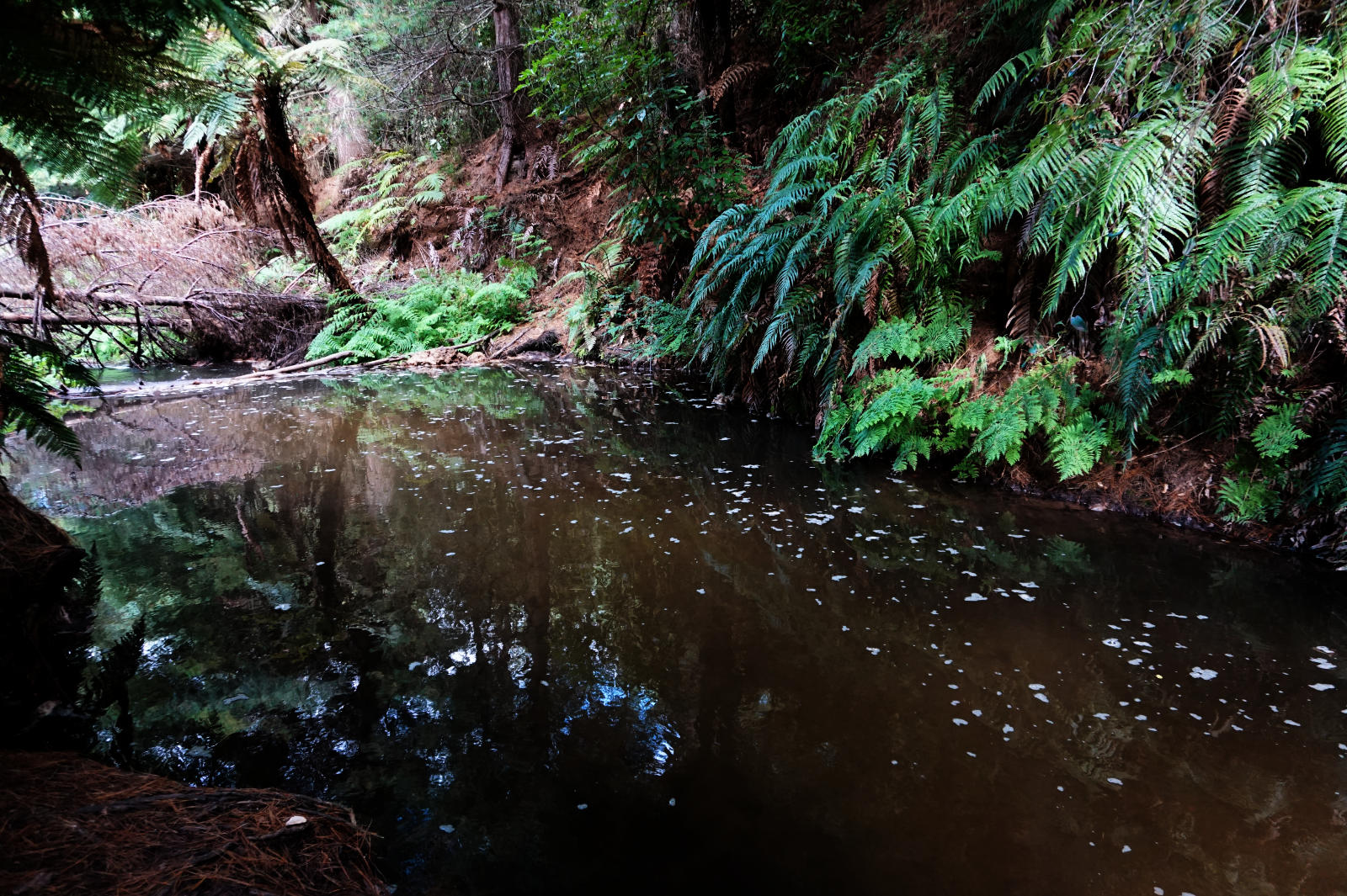 Kerosene Creek, ein geothermaler Fluss
